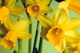 Spring Detox Extravaganza