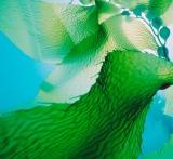 Kelp can help.